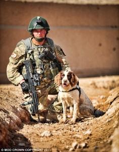 Springer Spaniel Sniffer Dog Jack