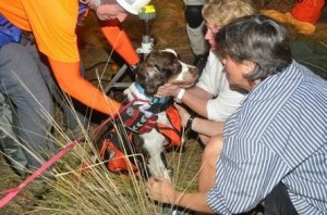 springer spaniel rescue from sinkhole